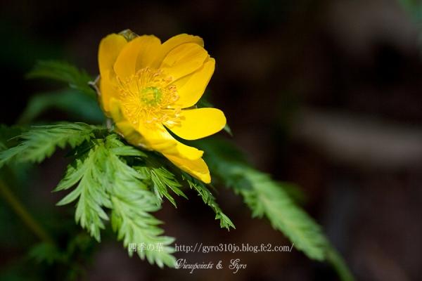 春の花 B3