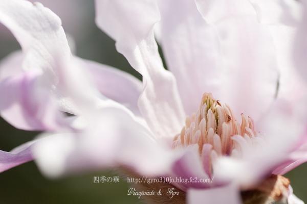 春の花 B4