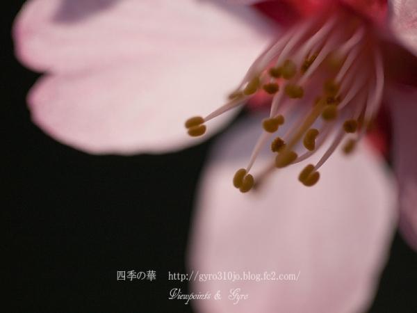 春の花 D5