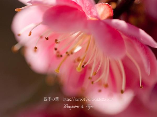 春の花 A5