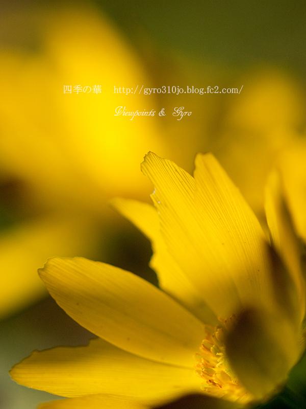 春の花 E1