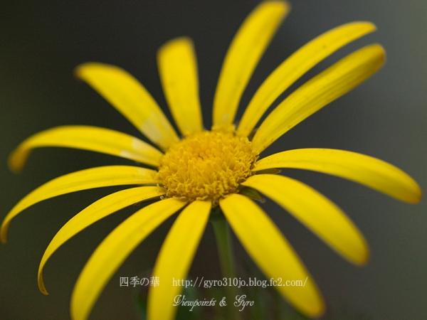 春の花 C5