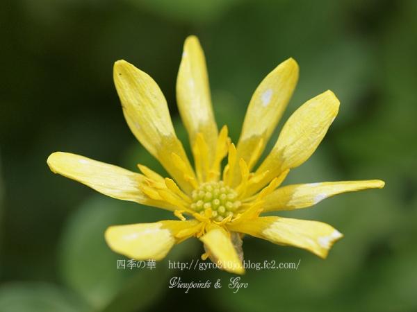 春の花 B5