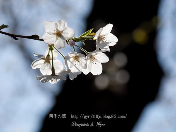 春の花 D2
