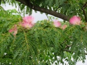 2 ネムの花