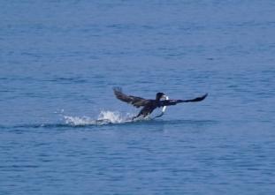 200824010 獲物を捕獲して飛び出す