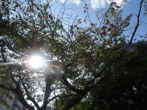 2 桜の紅葉