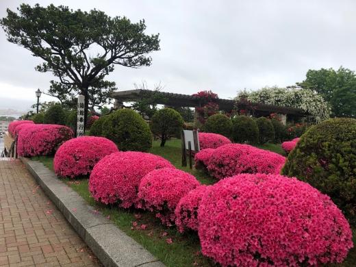 咲き誇る五月女花