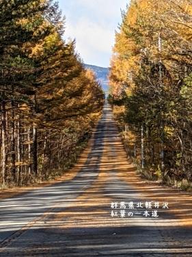 20201104群馬県北軽井沢、紅葉の一本道1