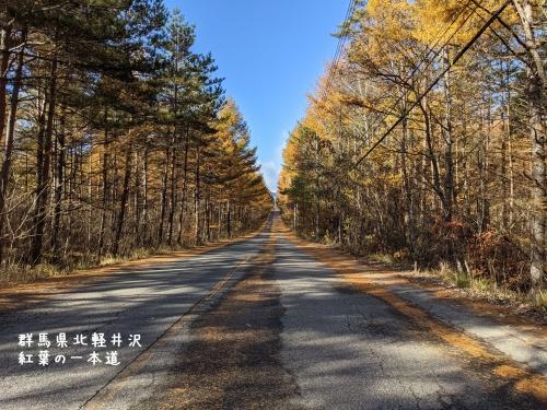 20201104群馬県北軽井沢、紅葉の一本道2