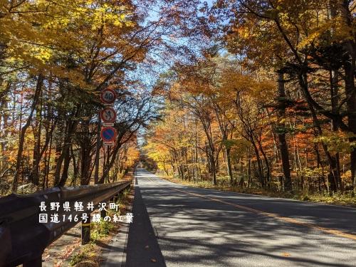 20201104長野県軽井沢町国道146号線の紅葉1
