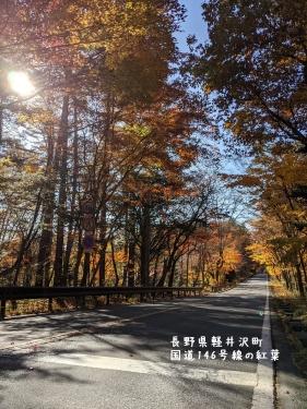 20201104長野県軽井沢町国道146号線の紅葉3