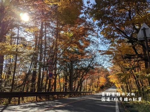 20201104長野県軽井沢町国道146号線の紅葉4