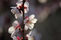 庭の花たち1