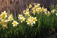 庭の花たち6