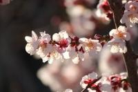 庭の花たち8