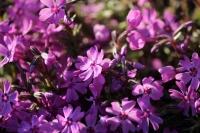 庭の花たち9