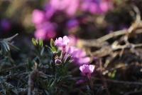 庭の花たち10
