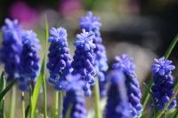 庭の春10