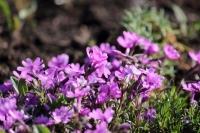 庭の春12
