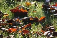 秋深まる1