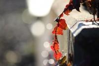秋深まる6