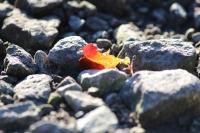 秋深まる7