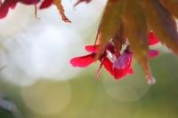 秋深まる10