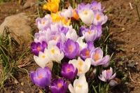 春の日に7