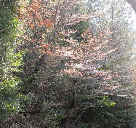 3・25緑地山桜