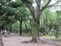 7・11鶴舞公園4