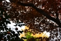 20初冬 黄葉とミカン