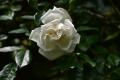 20春 アルベリック・バルビエ 花のみ