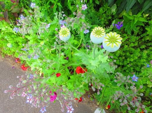 庭のものがたり3