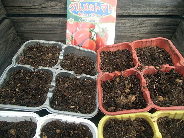トマトの種を播きました