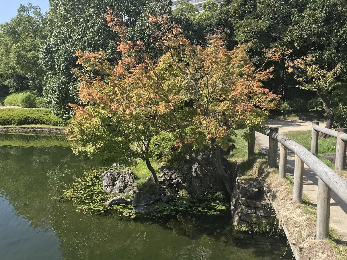 白鳥庭園5