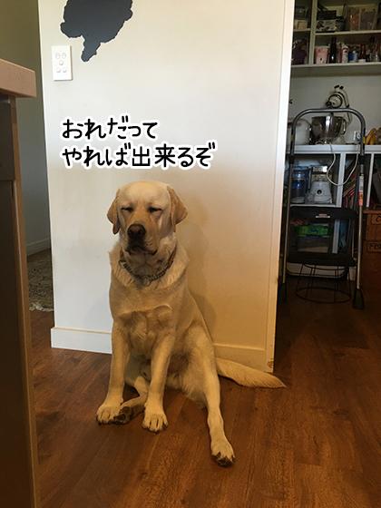 01122020_dogpic1.jpg