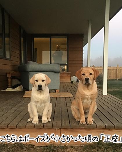 01122020_dogpic3.jpg