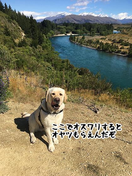 04122020_dogpic3.jpg