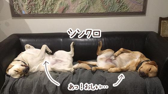 05062020_dogpic2.jpg