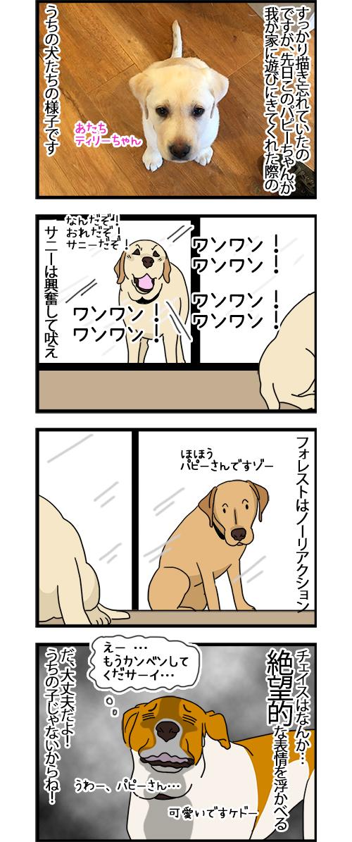 05102020_dogcomic.jpg