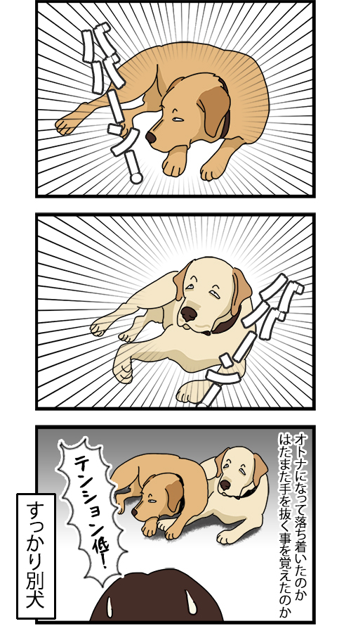 06072020_dogcomic2.jpg