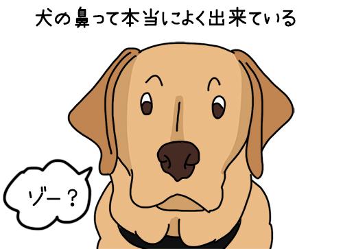 07072020_dog1.jpg