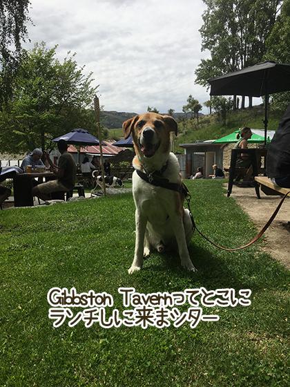 07112020_dogpic3.jpg