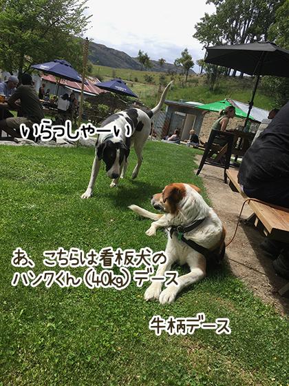 07112020_dogpic4.jpg
