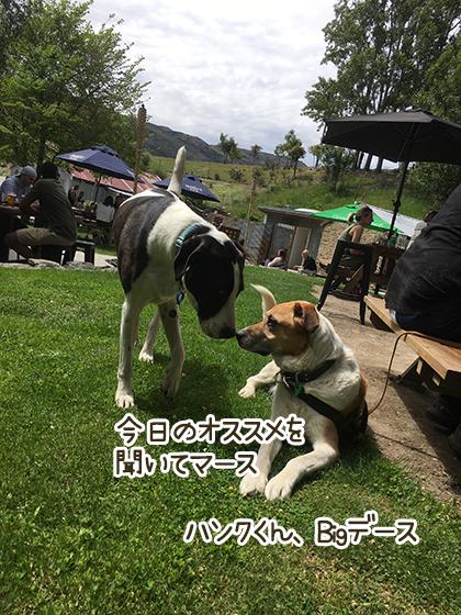 07112020_dogpic5.jpg