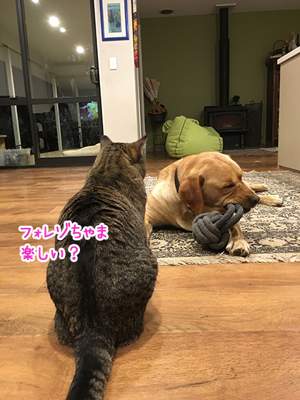08102020_dogpic1.jpg