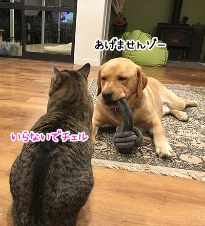 08102020_dogpic2.jpg