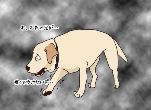 09062020_dog1.jpg