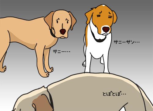 09062020_dog3.jpg